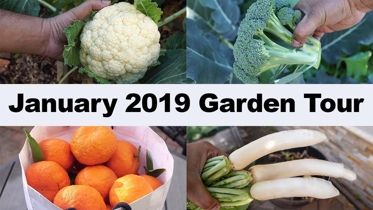 January 2019 Garden