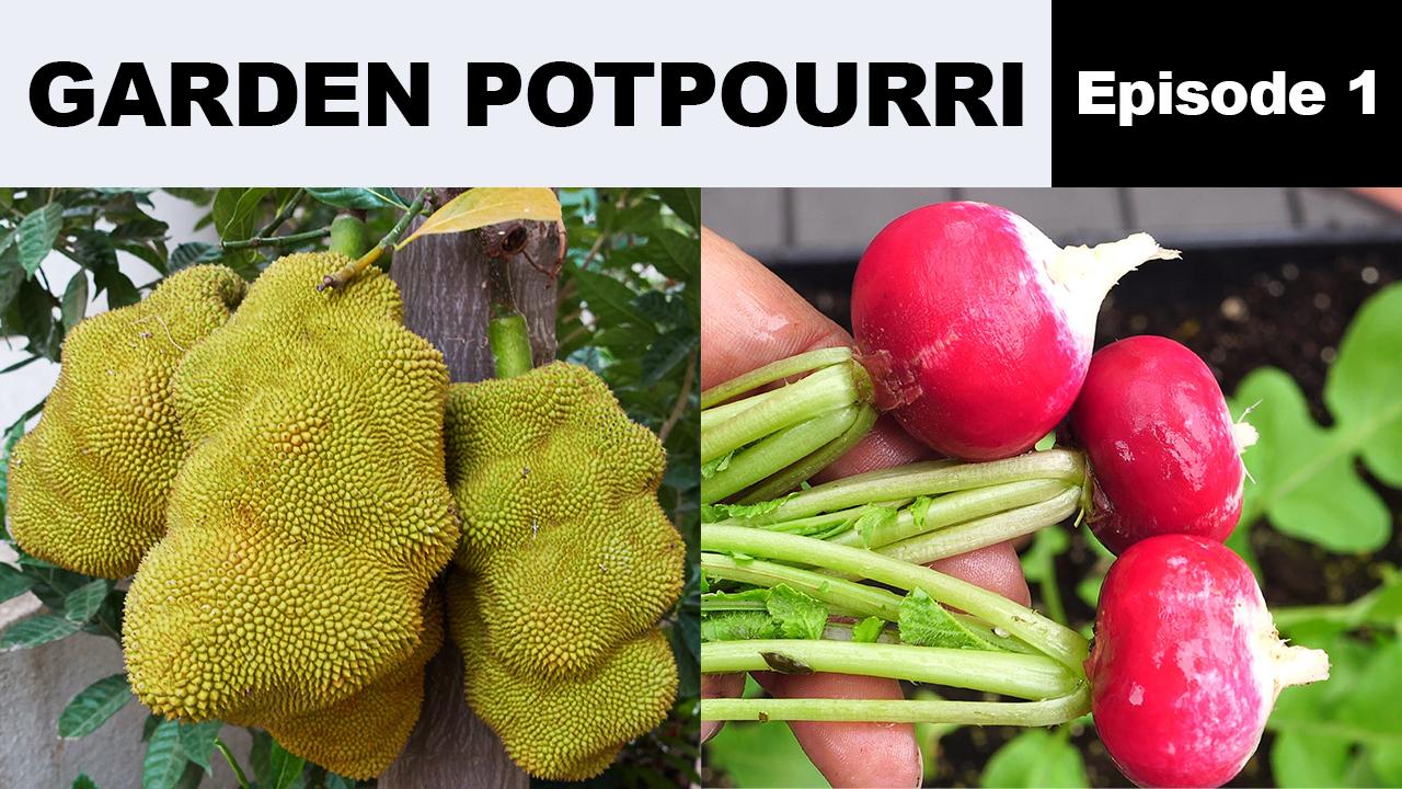 Garden Potpourri