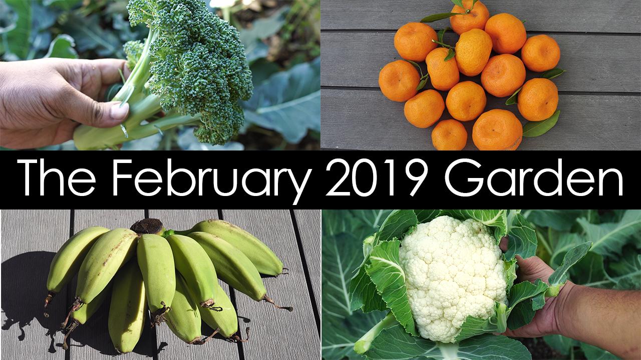 The February 2019 Garden