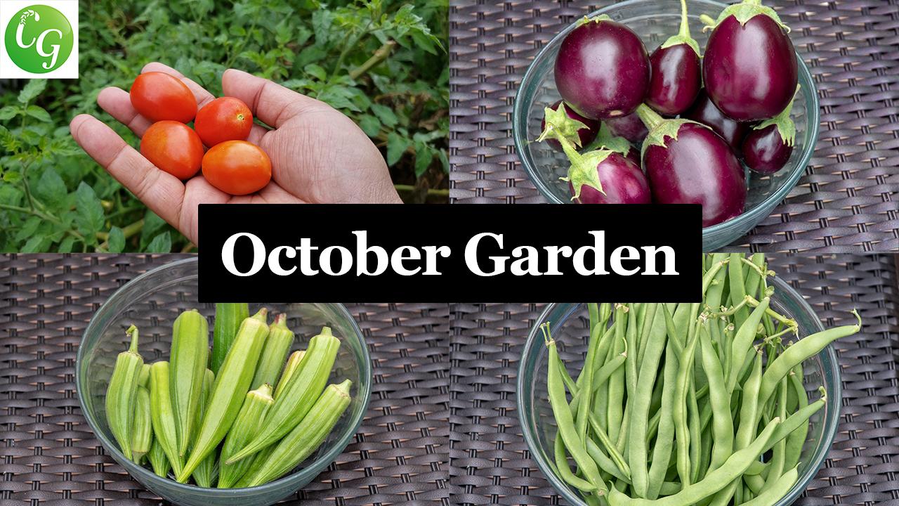 October 2018 Garden