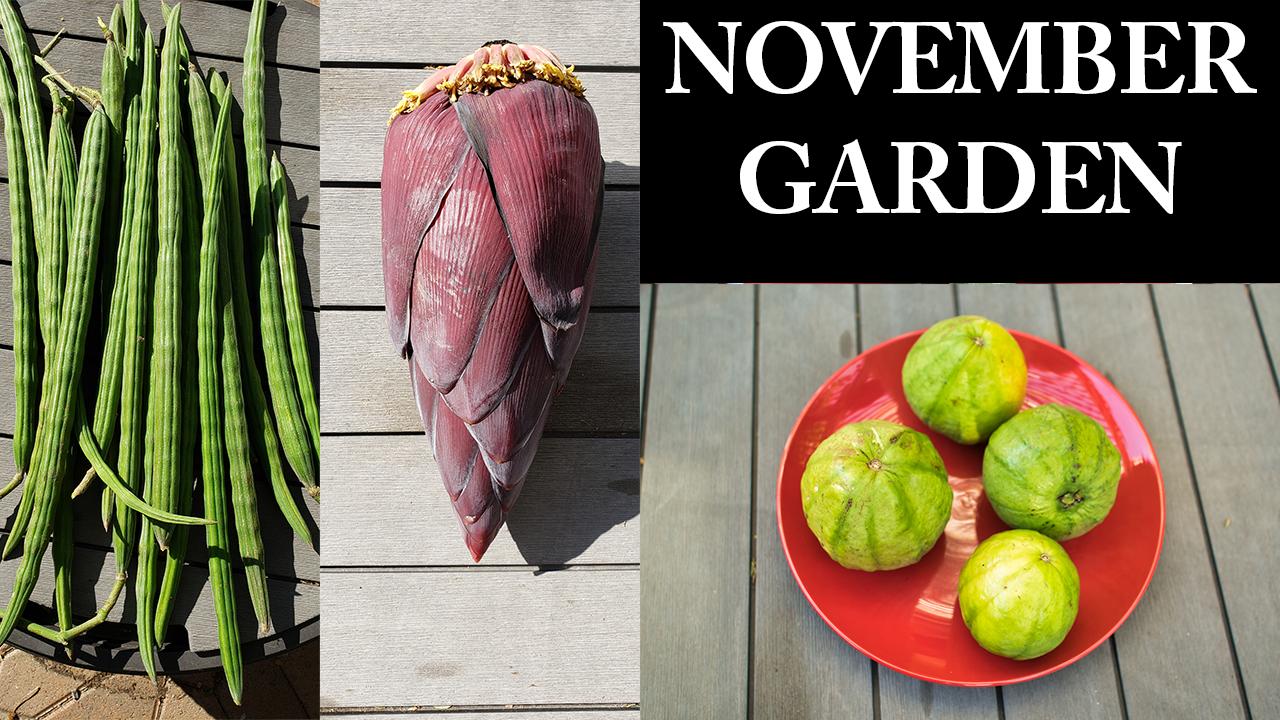 California November 2018 Garden