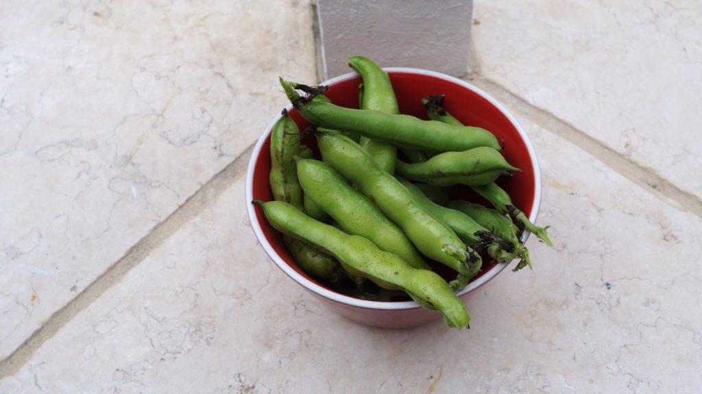 Fava beans or butter beans
