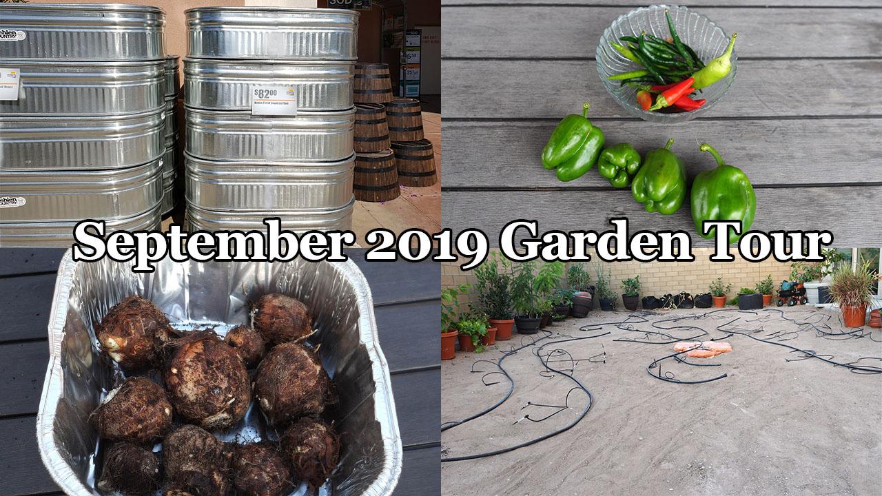 September 2019 Garden