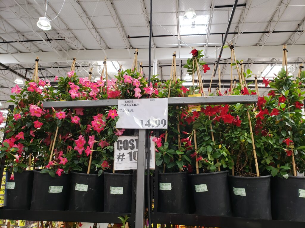 Flowering plants at Costco