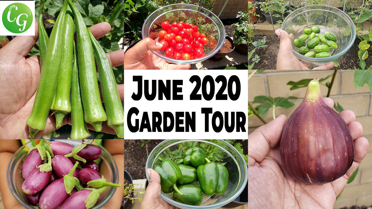 June 2020 Garden Tour