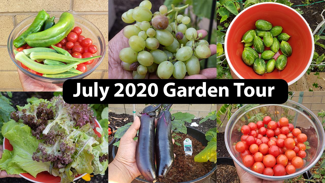 July 2020 Garden Tour