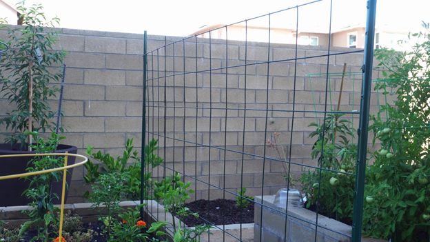 Wire remesh horizontally affixed in one raised bed