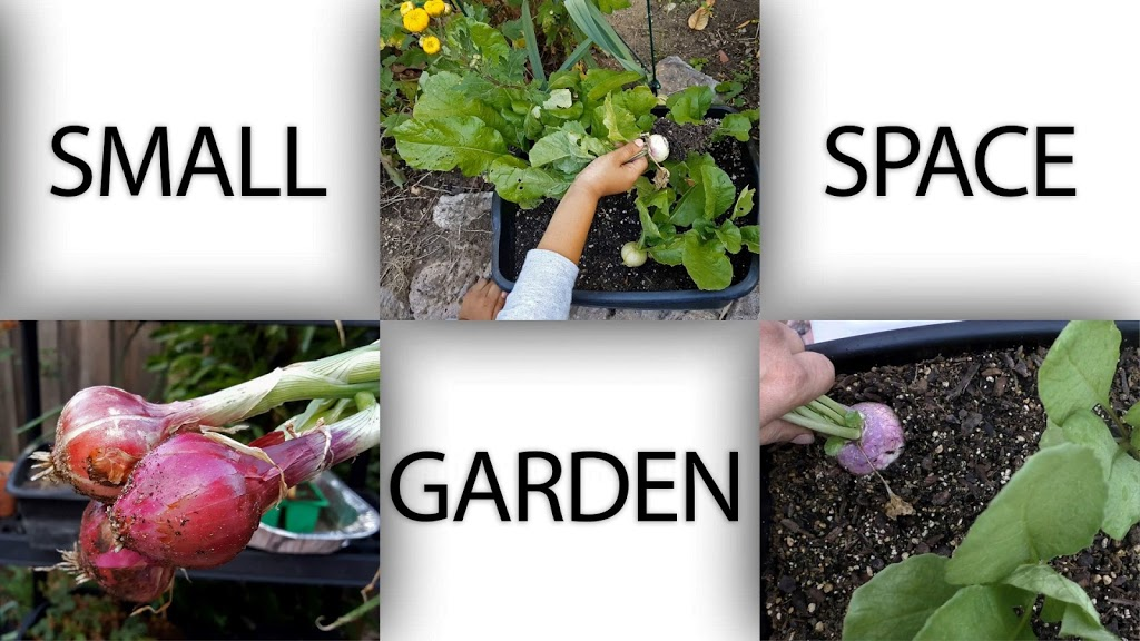 Small space gardening ? Ideas to grow plants in apartments, patio and small areas