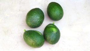GEM Avocado