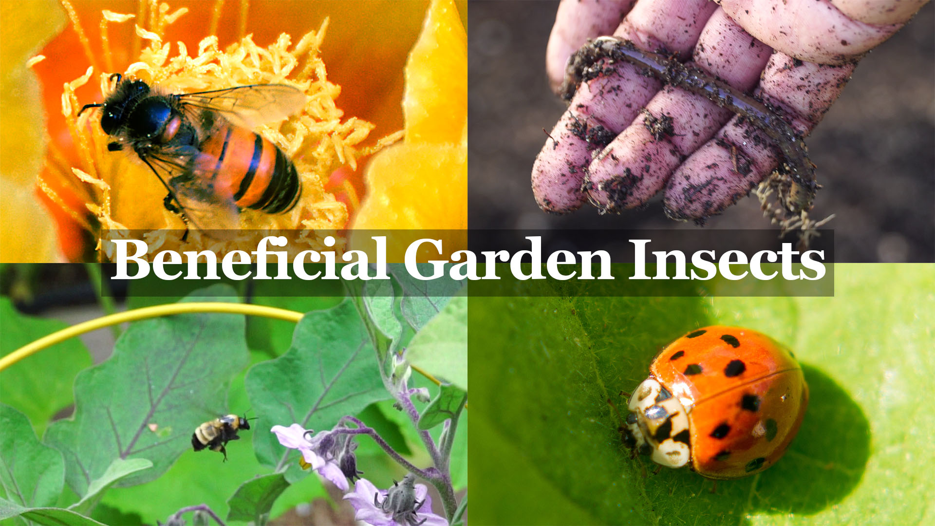 Beneficial Insects You Want in your Garden – The Gardener's Best Friends!