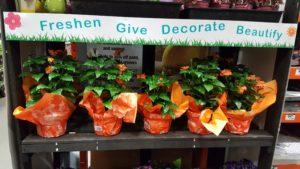 Sundance Crossandra Plant At Home Depot
