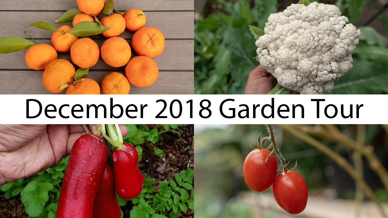 California Garden – December Garden Tour – Gardening Tips, Harvests & More!