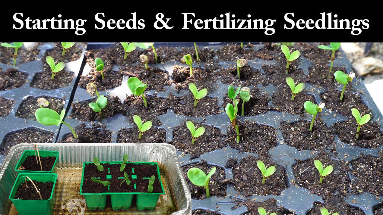 Starting seeds and fertilizing seedlings