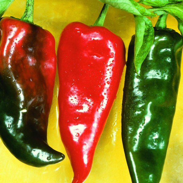 Anaheim Chilli Peppers