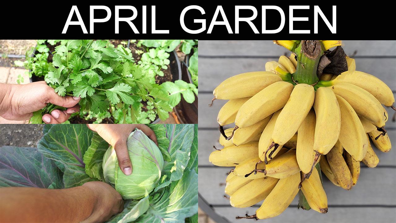 California Spring Garden Tour April 2019 – Gardening Tips & More