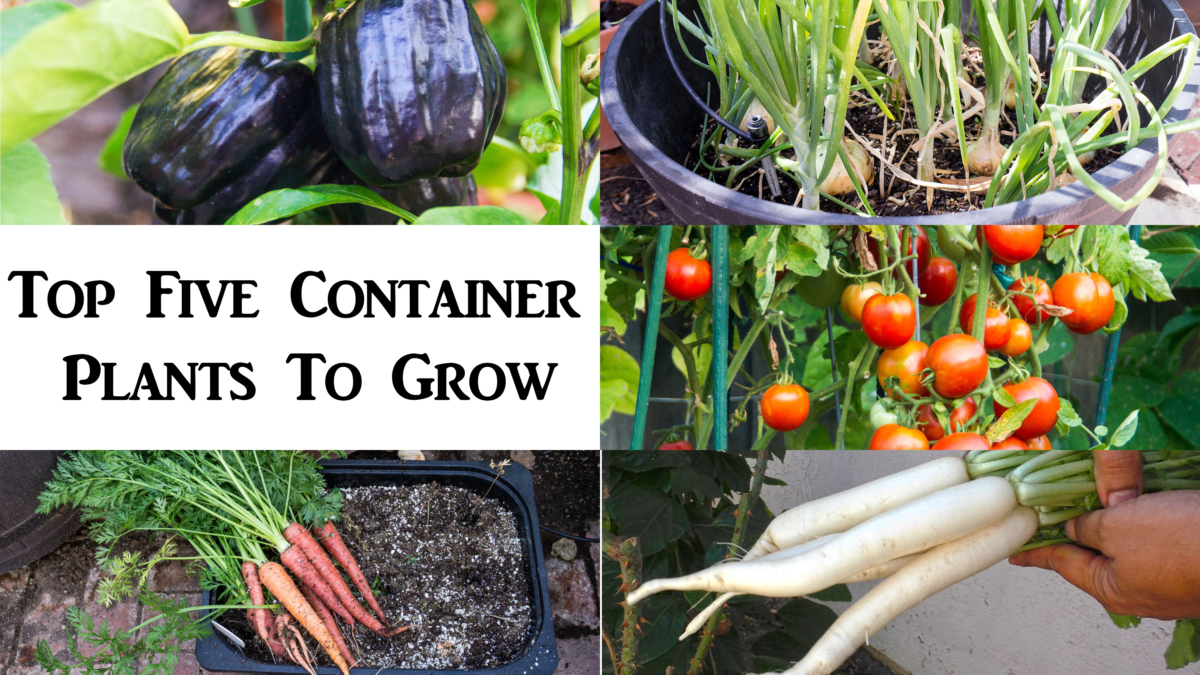 5 Best Vegetables for Your Edible Container Garden