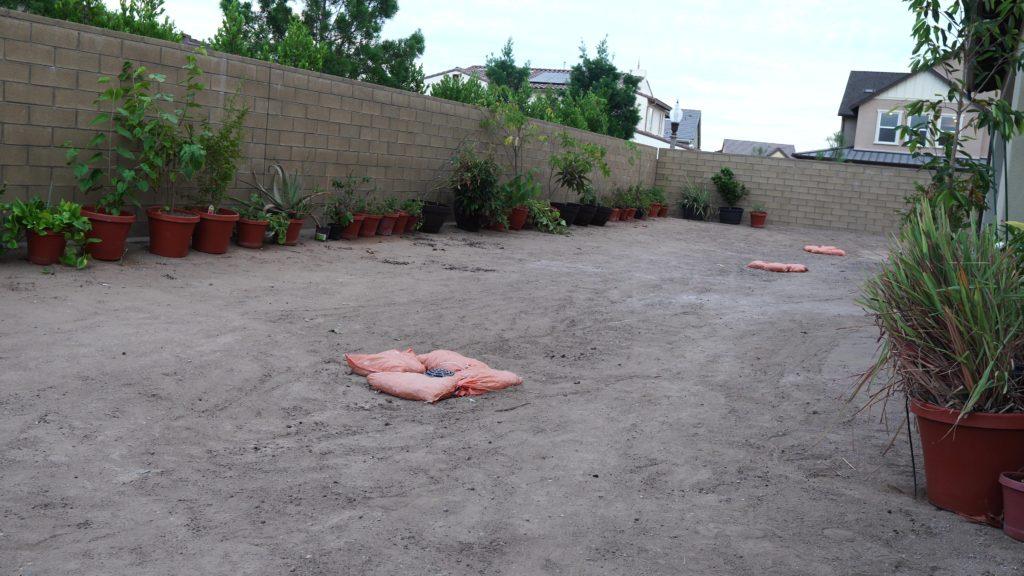 New California Garden - Back yard