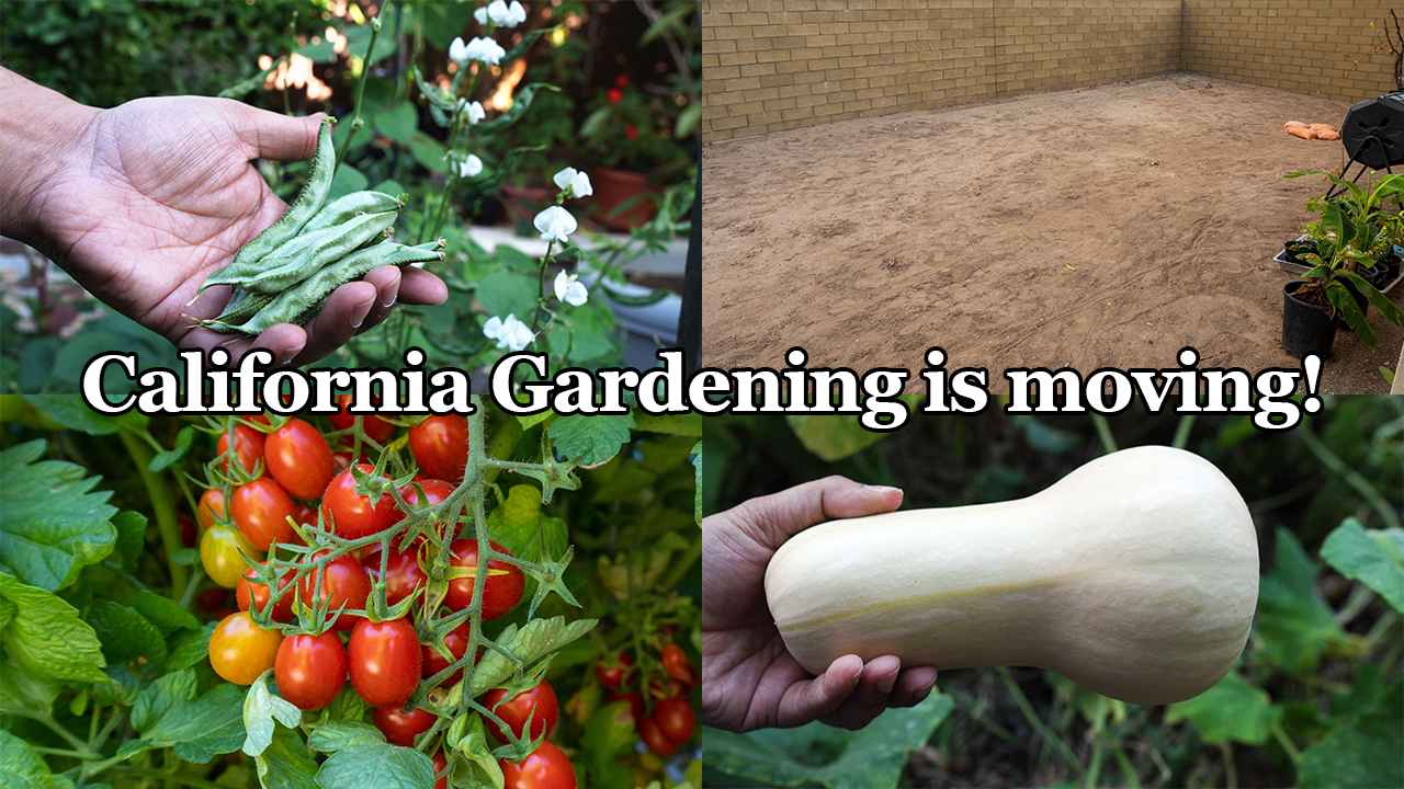 Important Announcement From California Gardening & some Summer Vegetable Harvests