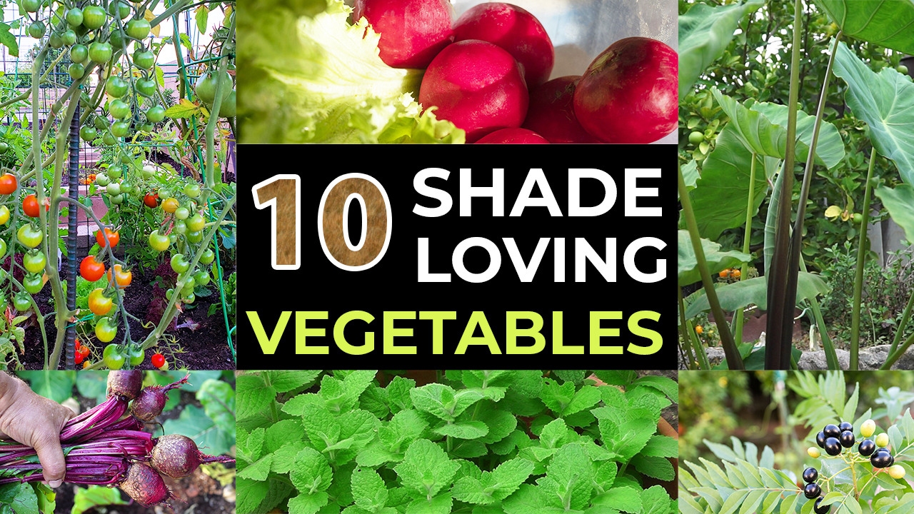 Top 10 Shade Loving Vegetables – The Best Veggies To Grow In Shade