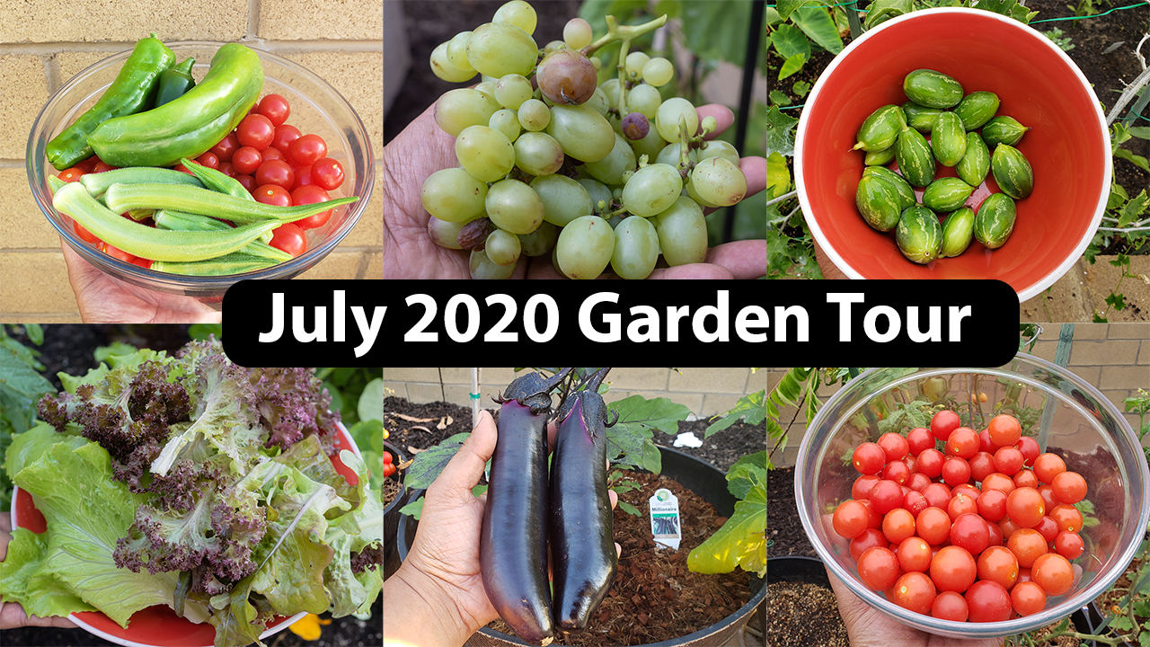 Full July 2020 Garden Tour with Harvests, Gardening Tips, Things to Do & Recipes