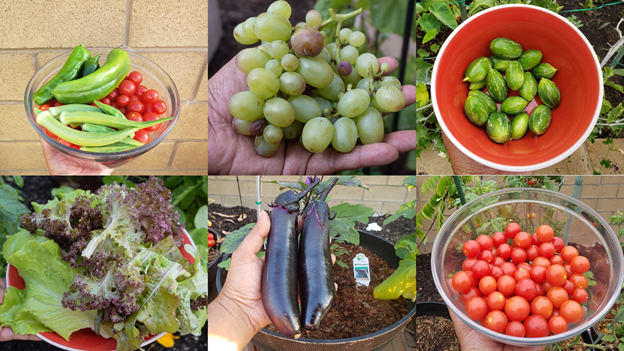 Some of the harvests