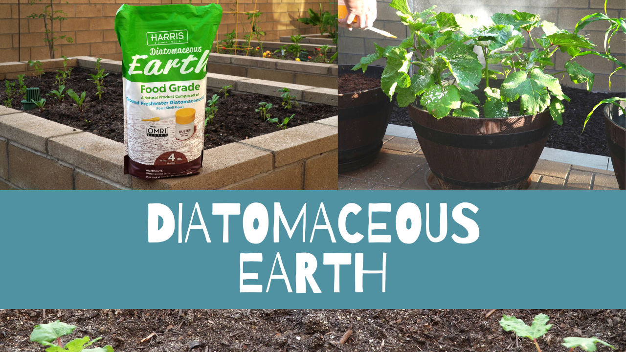What is Diatomaceous Earth and How to use Diatomaceous Earth in your Garden?