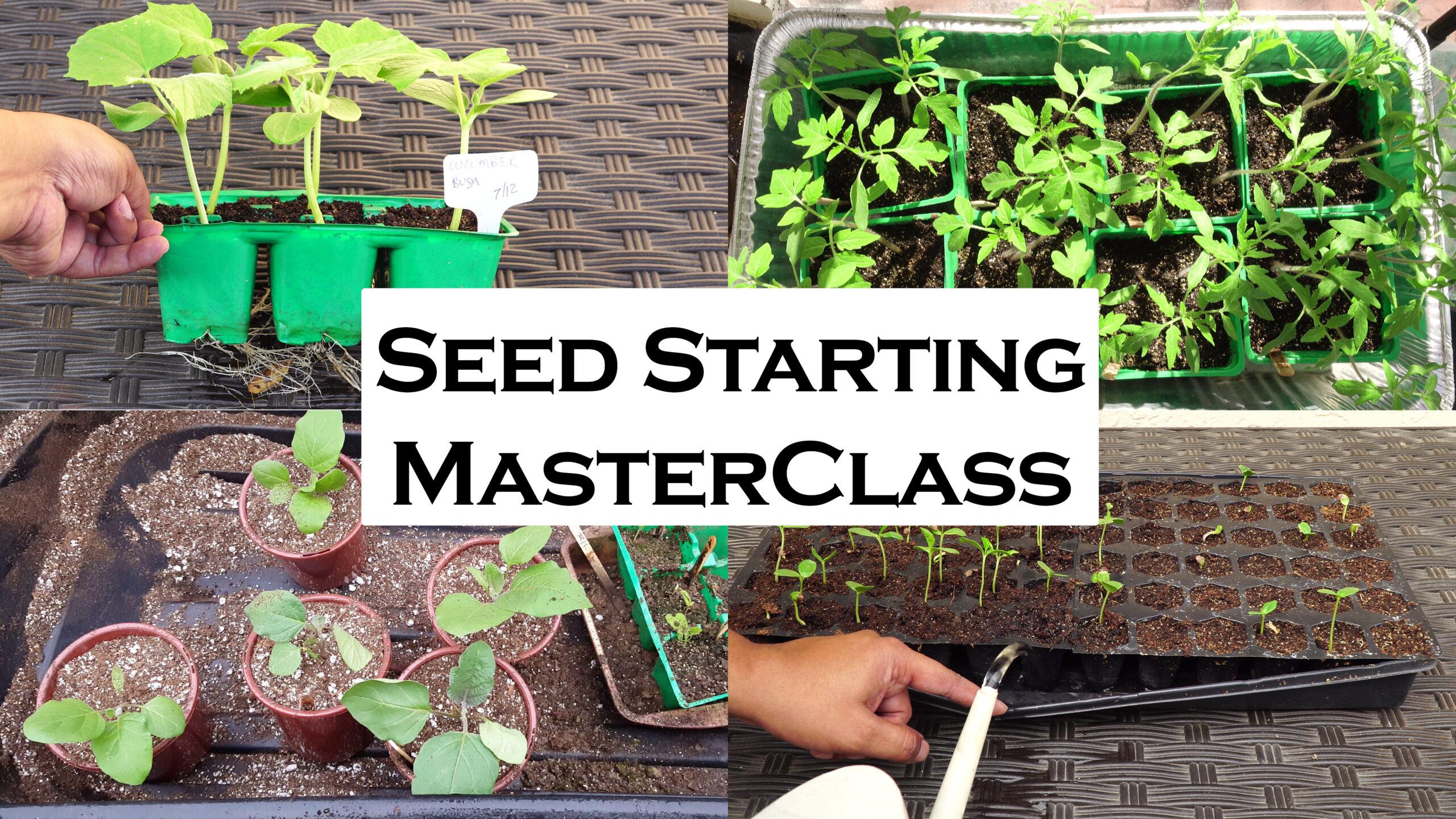 Plant Propagation – Seed Starting, Fertilizer For Seedlings, Transplanting Plants Masterclass