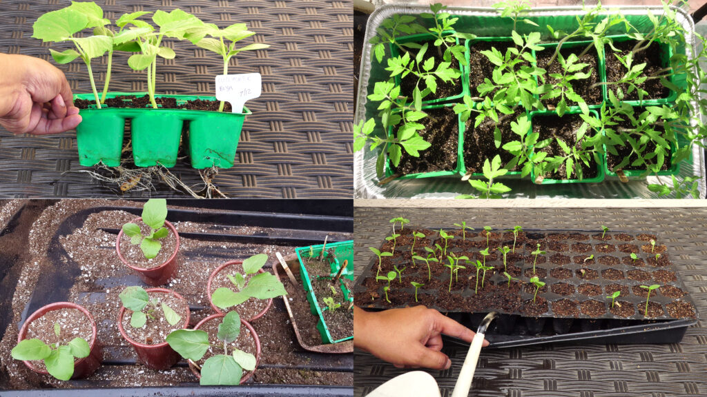 Propagating plants from seeds