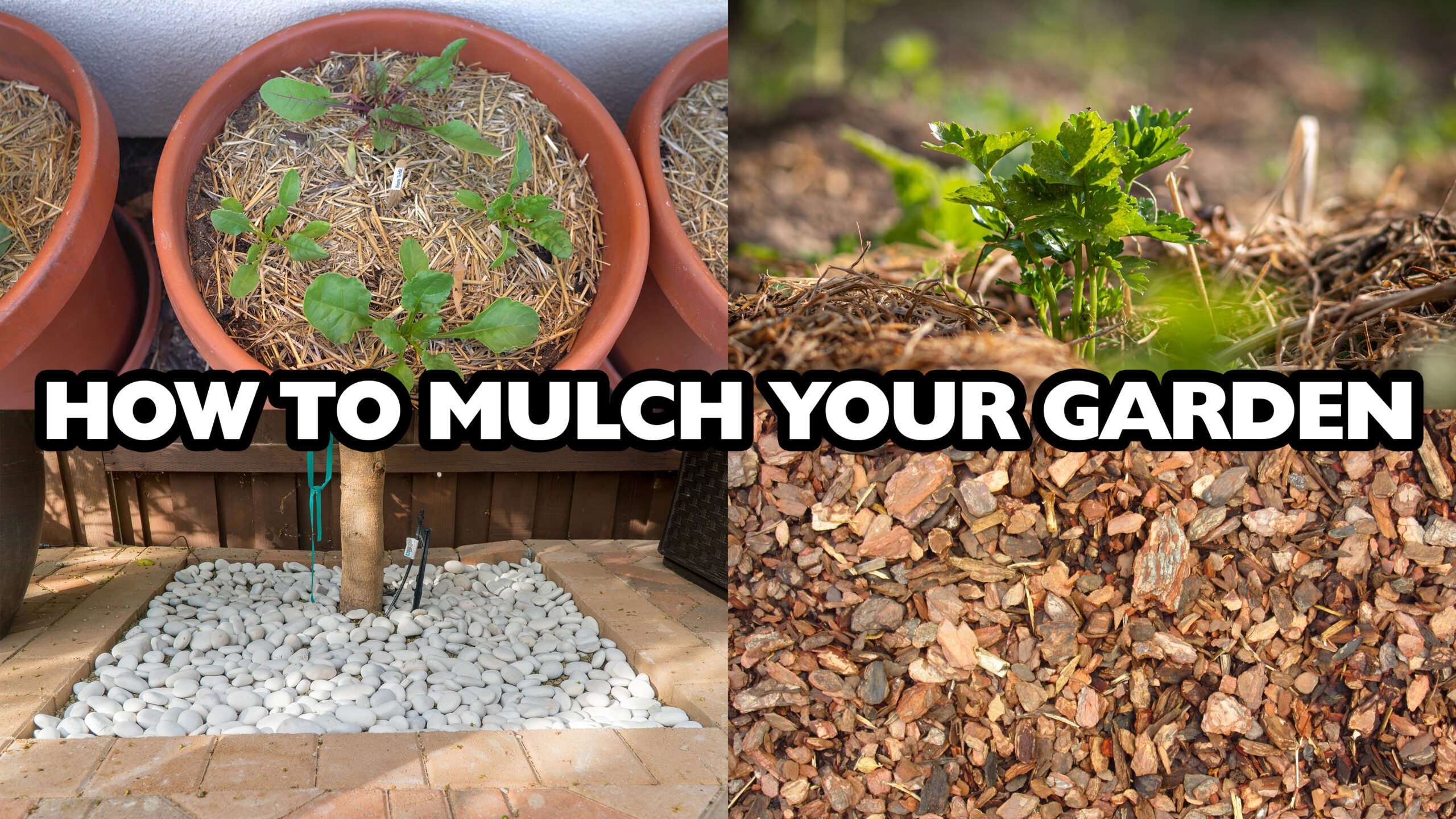 Mulching 101 How to mulch your garden and what mulch to choose