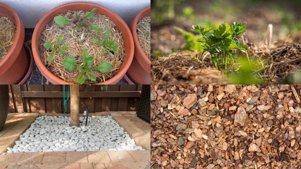 Different mulch mediums