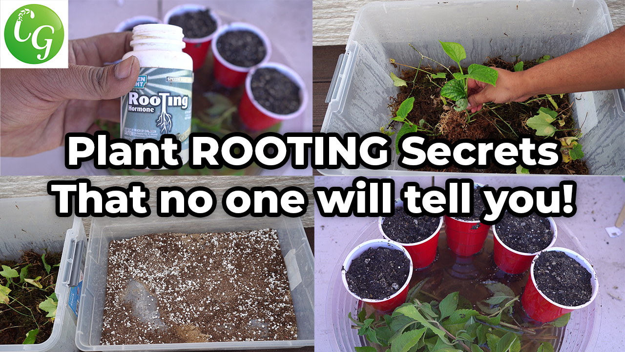Secret Plant Cuttings Propagation Tips No One Will Tell You!