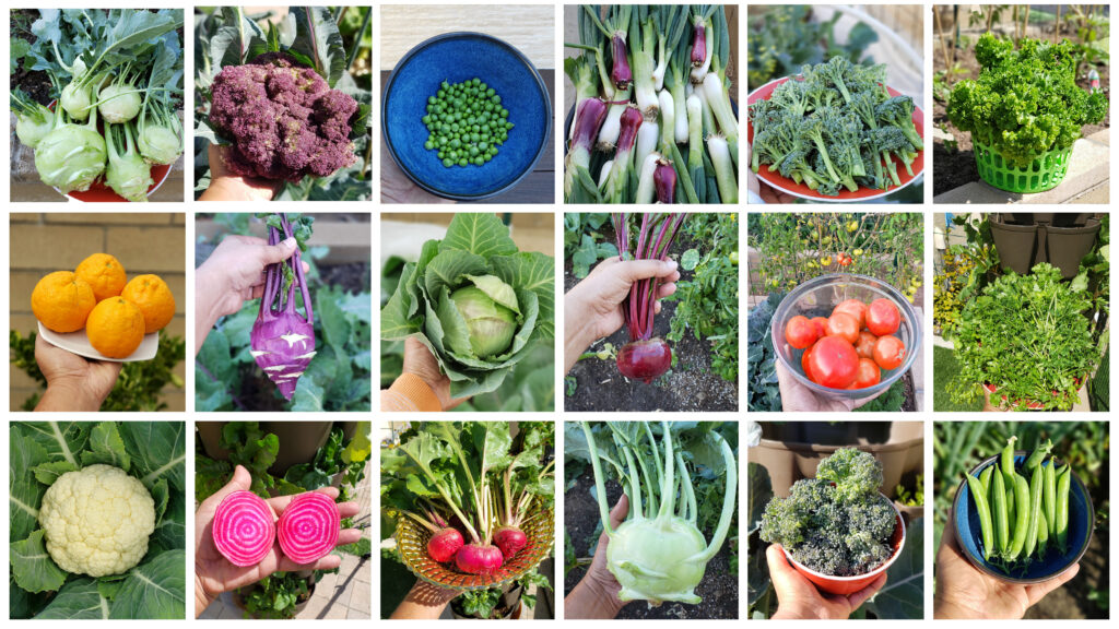 Collage of some of our harvests this month