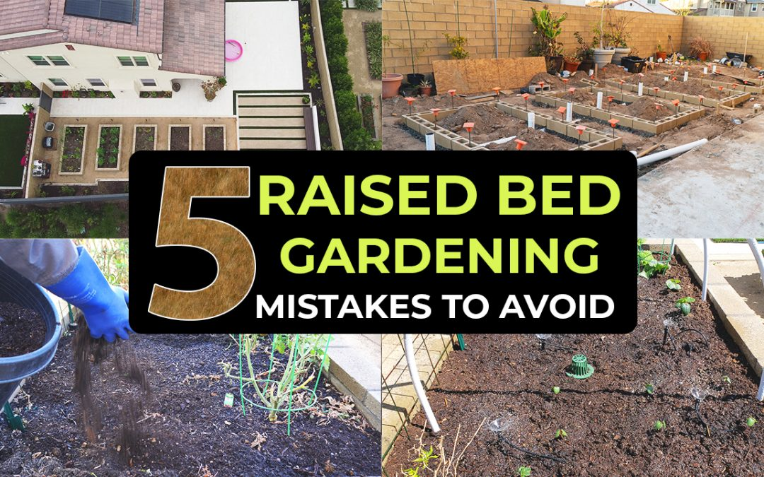 Top 5 Raised Bed Gardening Mistakes To Avoid – Garden in Raised Beds Effectively