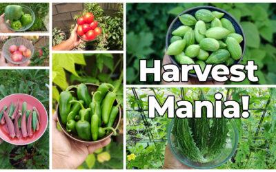 Harvest Mania! California Garden July 2021 Garden Tour Harvests & Gardening Tips!