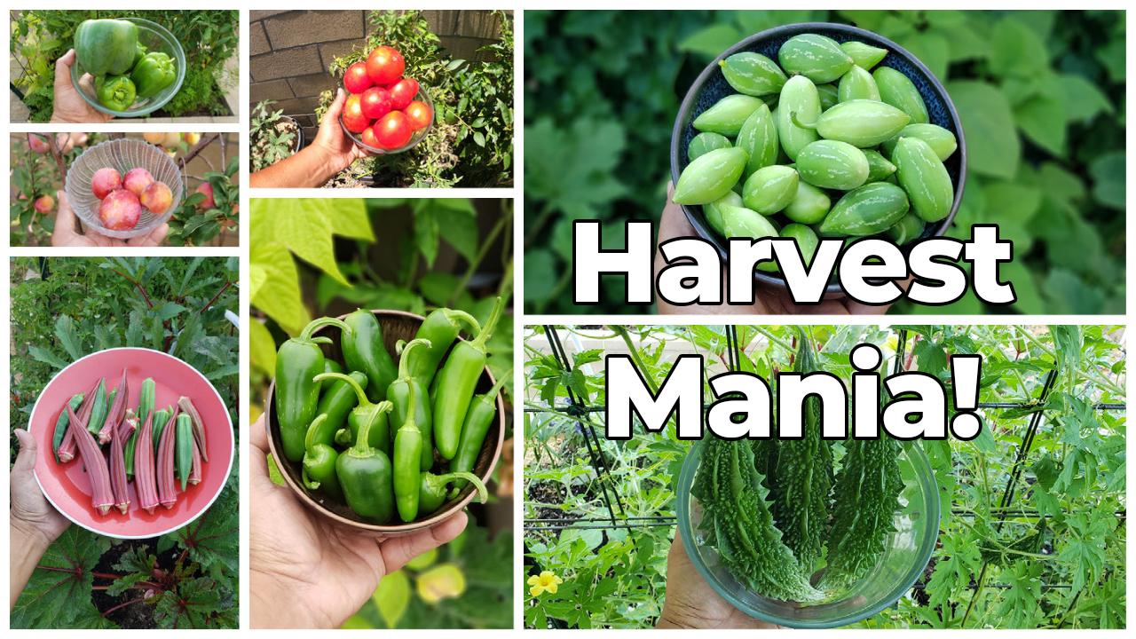 Harvest Mania - July 2021 Garden Tour